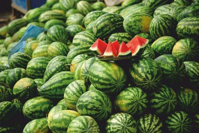 شروع برداشت محصولات جالیزی در شمال سیستان و بلوچستان